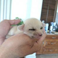 Fennec Fox Animals for sale in Cheyenne, WY, USA. price: NA