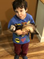 Ferret Animals for sale in McKinney, TX, USA. price: NA