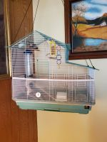Finch Birds for sale in Mountain Home, ID 83647, USA. price: NA