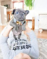French Bulldog Puppies for sale in Canal St, New York, NY, USA. price: NA