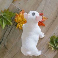 French Bulldog Puppies for sale in Grand Bahama, Florida 34746, USA. price: NA