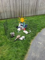 French Bulldog Puppies for sale in Nashua, NH, USA. price: NA