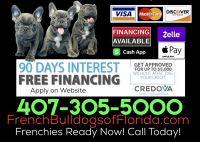 French Bulldog Puppies for sale in Orlando, FL, USA. price: NA