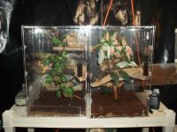 Gecko Reptiles for sale in Akron, OH, USA. price: NA