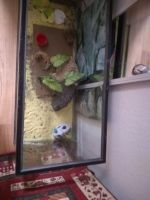 Gecko Reptiles for sale in West Covina, CA, USA. price: NA
