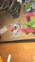 Gecko Reptiles Photos