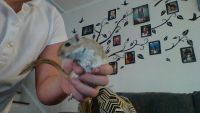 Gerbil Rodents for sale in 2207 Chestnut St, Wilmington, NC 28405, USA. price: NA