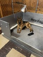German Shepherd Puppies for sale in Richfield, MN, USA. price: NA