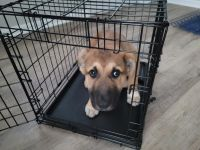 German Shepherd Puppies for sale in Baltimore, MD 21214, USA. price: NA