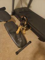 German Shepherd Puppies for sale in Stone Mountain, GA, USA. price: NA