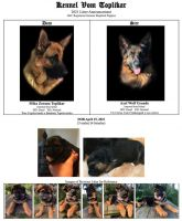 German Shepherd Puppies for sale in Melrose, FL 32666, USA. price: NA
