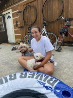 German Shepherd Puppies for sale in Orlando, FL, USA. price: NA
