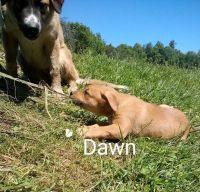 German Shepherd Puppies for sale in Watervliet, MI 49098, USA. price: NA