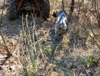 German Shorthaired Pointer Puppies for sale in Perryville, AR 72126, USA. price: NA
