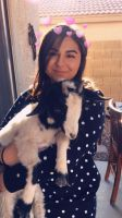 Goat Animals for sale in Litchfield Park, AZ 85340, USA. price: NA