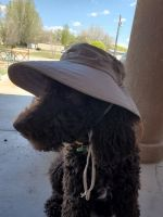Goldendoodle Puppies for sale in Florence, AZ 85132, USA. price: NA