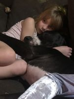 Great Dane Puppies for sale in Coarsegold, CA 93614, USA. price: NA