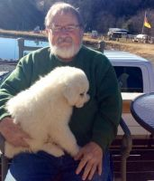 Great Pyrenees Puppies for sale in Houston, TX, USA. price: NA
