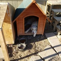 Great Pyrenees Puppies for sale in Celeste, TX 75423, USA. price: NA