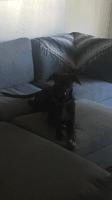 Greyhound Puppies Photos