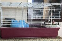 Guinea Pig Rodents for sale in Somerset, Franklin Township, NJ 08873, USA. price: NA