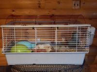 Guinea Pig Rodents for sale in OH-56, Circleville, OH 43113, USA. price: NA