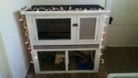 Guinea Pig Rodents for sale in New Haven, IN 46774, USA. price: NA