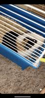 Guinea Pig Rodents for sale in Bradenton, FL 34205, USA. price: NA