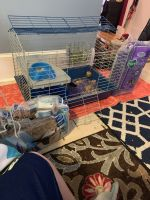 Guinea Pig Rodents for sale in Salem, MA, USA. price: NA