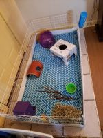 Guinea Pig Rodents for sale in Akron, OH, USA. price: NA