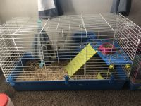 Guinea Pig Rodents for sale in Plymouth, MN, USA. price: NA