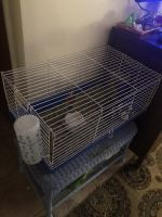 Guinea Pig Rodents for sale in Apache Junction, AZ, USA. price: NA