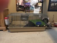Guinea Pig Rodents for sale in Clovis, CA, USA. price: NA