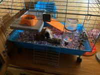Guinea Pig Rodents for sale in Colton, CA 92324, USA. price: NA