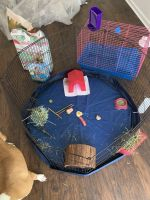 Guinea Pig Rodents for sale in 1711 23rd Ave N, Nashville, TN 37208, USA. price: NA