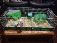 Guinea Pig Rodents for sale in Taylor, MI 48180, USA. price: NA