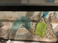 Hamster Rodents for sale in Providence, RI, USA. price: NA