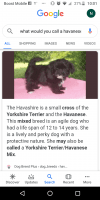 Havanese Puppies for sale in Terre Haute, IN, USA. price: NA