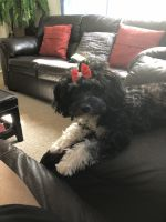 Havanese Puppies for sale in UPPR MARLBORO, MD 20772, USA. price: NA