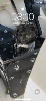 Havanese Puppies for sale in Naples, FL, USA. price: NA