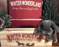 Holland Lop Rabbits for sale in Newberg, OR 97132, USA. price: NA