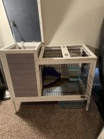 Holland Lop Rabbits for sale in Killeen, TX, USA. price: NA