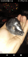 House Mouse Rodents Photos