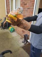 Iguana Reptiles for sale in California, MD, USA. price: NA