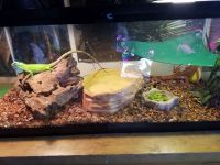 Iguana Reptiles for sale in Belle Center, OH 43310, USA. price: NA