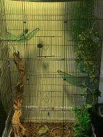 Iguana Reptiles for sale in Thornton, CO, USA. price: NA
