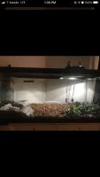 Iguana Reptiles for sale in 724 Sandlewood Ln, Chesapeake, VA 23322, USA. price: NA