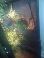 Iguana Reptiles for sale in Bucks County, PA, USA. price: NA