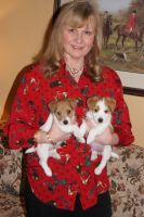 Jack Russell Terrier Puppies for sale in Manorville, NY 11949, USA. price: NA