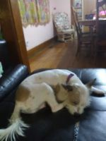Jack Russell Terrier Puppies for sale in Frankfort, IN 46041, USA. price: NA